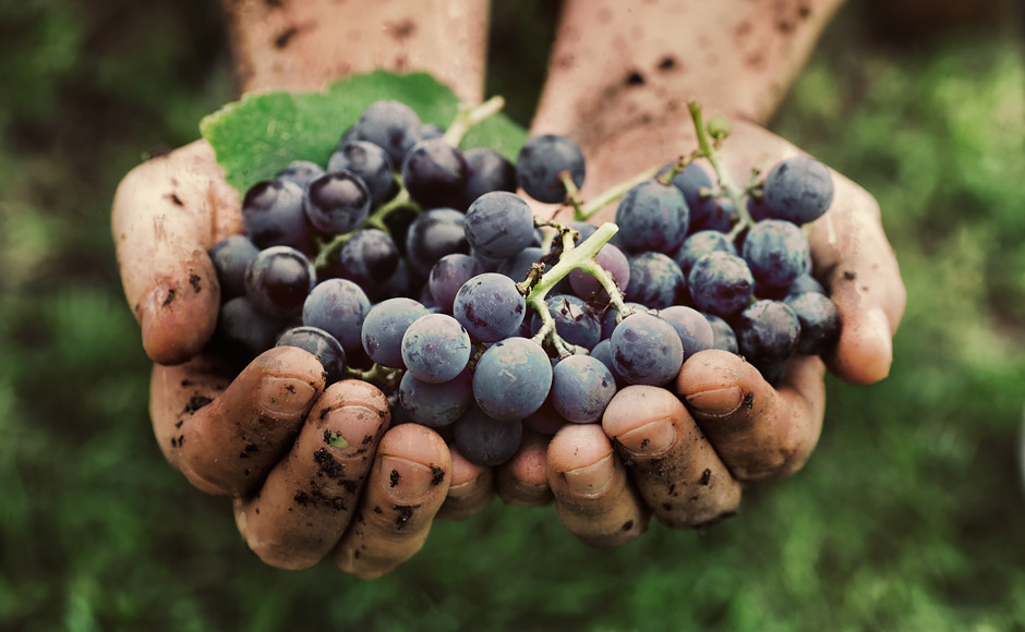 KK Portugal Vineyard Tours